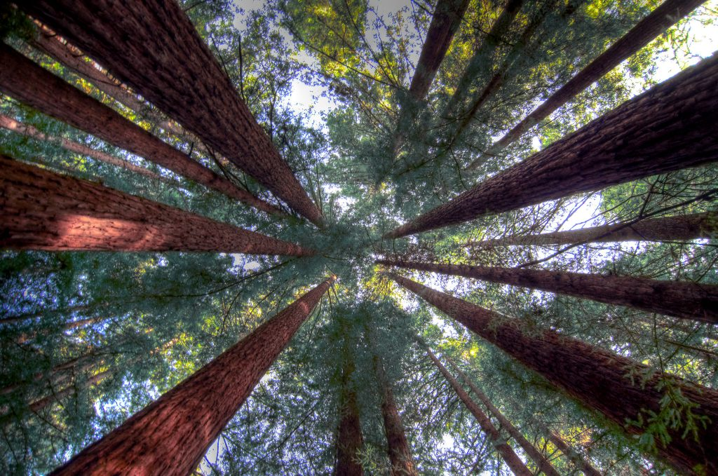 Humboldt Redwoods by Scrubhiker/Creative Commons.