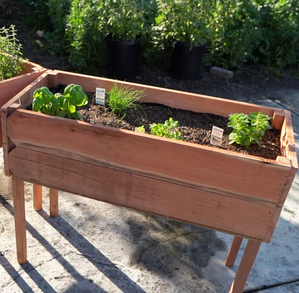 Elevated Raised Redwood Planter with Herbs
